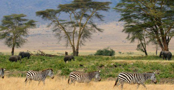 Tanzania Landeninformatie
