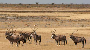 Namibie en Botswana - Desert & Delta