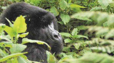 14 dagen fascinerende nationale parken en gorilla's