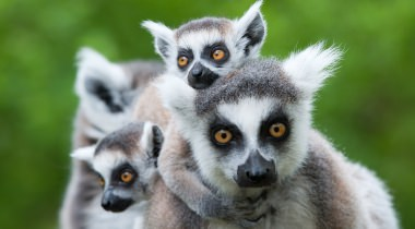 22 daagse groesreis Madagascar