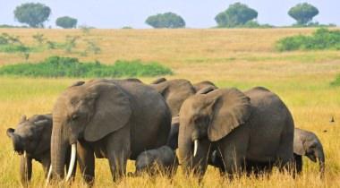 """20 daagse groepsreis """"Het beste van Oost Afrika!"""""""