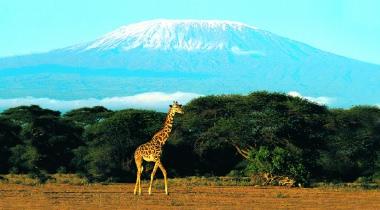 14-daagse safari Kenia en Tanzania