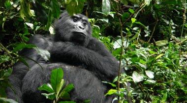 Groen, groener, groenst: ontdek veelzijdig Oeganda