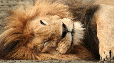 Safari in ongerept Zuid-Tanzania