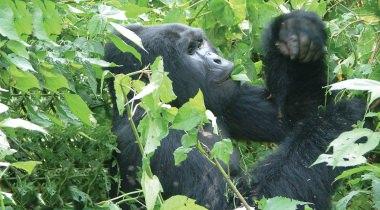 8 dagen - fascinerende wereld van de apen