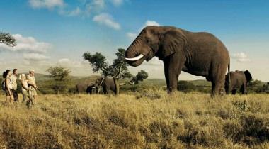 19 dagen - de mooiste nationale parken van Zuid-Afrika