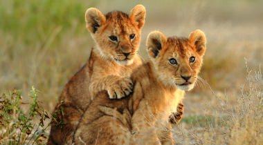 Tanzania Familiereis