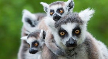 Madagaskar Familiereis