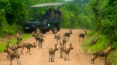 Zambia & Botswana Safari