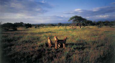 Autorondreis Safari met Kids Malariavrij