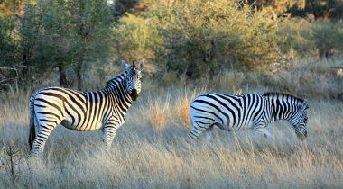 Zuidelijk Afrika Kampeerreis