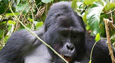Highlights of Uganda - 15 daagse groepsreis