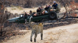 Safari Sabi Sands Wildreservaat