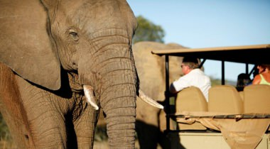 Karoo en olifanten van Addo
