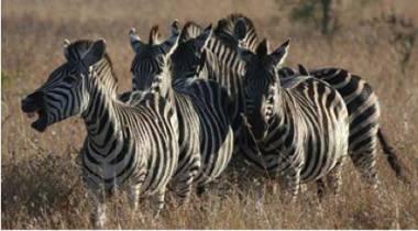 Bush Tour Zuid-Afrika