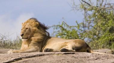 16-daagse lodge groepssafari Tanzania