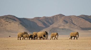 Rondreis veelzijdig Namibië