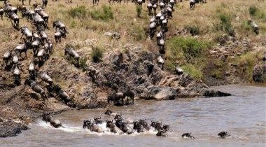 Fotosafari Tanzania crossings