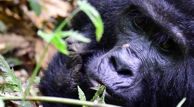 Maatwerk fly-in safari Oeganda 6-daags