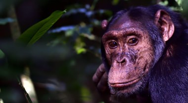 Maatwerk safari Oeganda 10-daags
