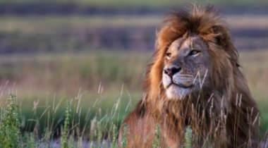 5 daagse Tanzania safari