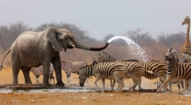 6 daagse safari, heerlijk door tanzania reizen
