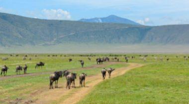 7 daagse safari Tanzania