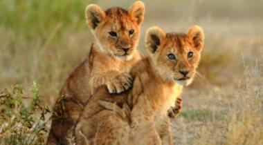 13 daagse safari + Zanzibar vakantie
