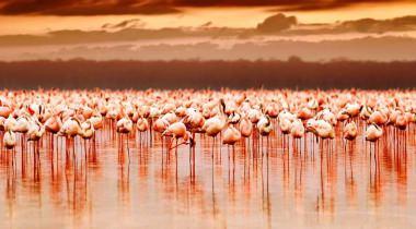 10 dagen Highlights van Kenia