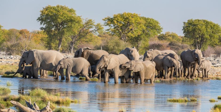 Etosha National Park, uitgestrekte zoutvlaktes en heel veel wilde dieren