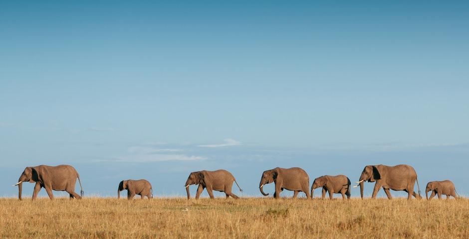 Addo Elephant National Park, de plek om olifanten te zien in Zuid-Afrika