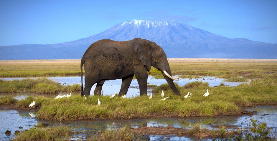 Amboseli is bekend voor olifanten en uitzichten op de Kilimanjaro