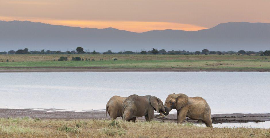 Tsavo National Park, het grootste natuurreservaat van Kenia