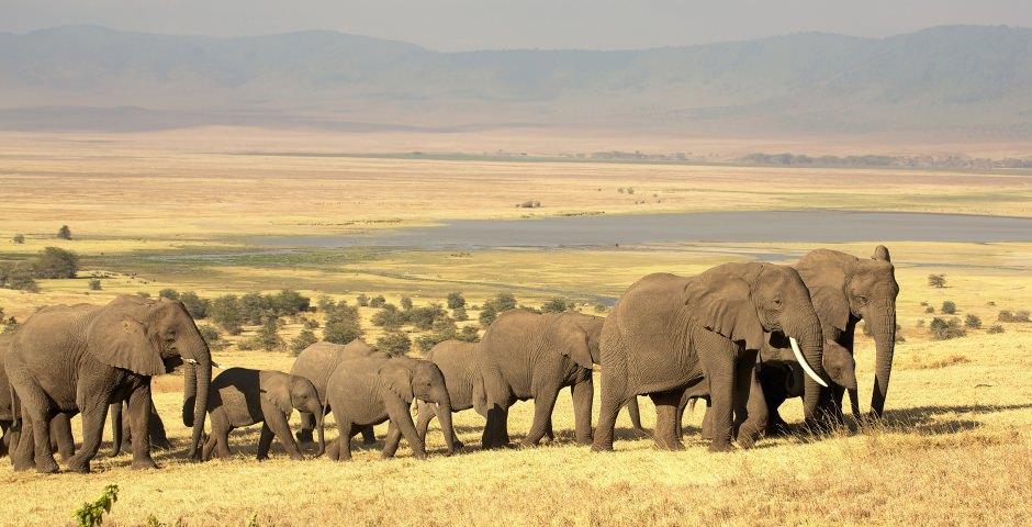 De Ngorongoro Krater heeft veel wilde dieren en mooie uitzichten