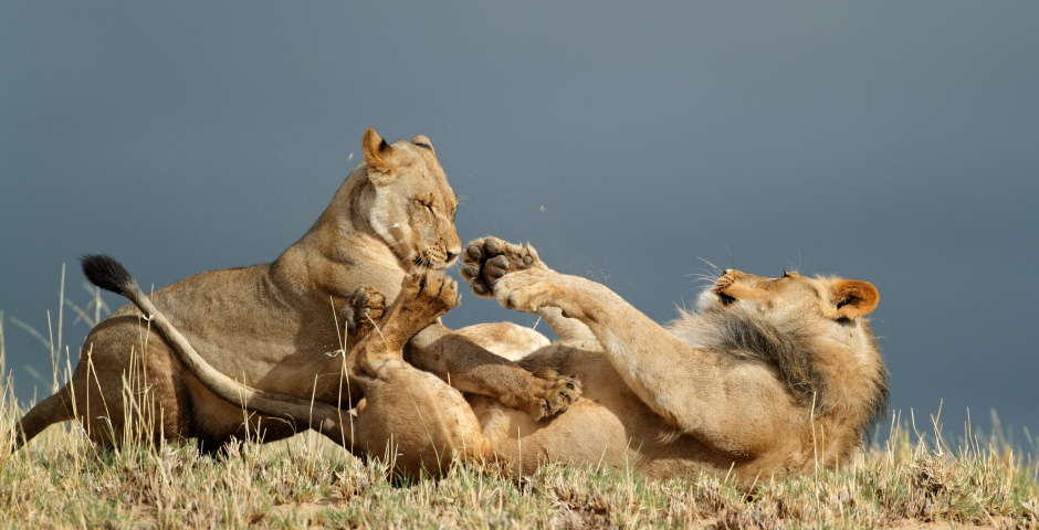 Ontdek de wildernis in The Central Kalahari Game Reserve
