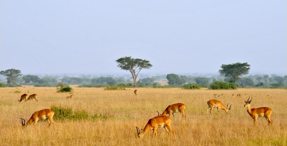 Op safari in Queen Elizabeth Nationaal Park